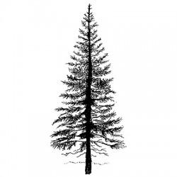 Lavinia Stamps FIR TREE 1
